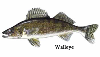 how to catch small mouth on lake simcoe